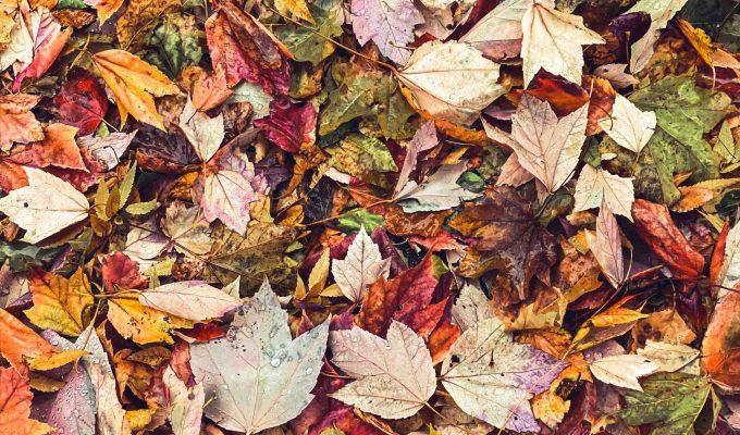 How to make leaf mould – easy, free garden fertiliser!