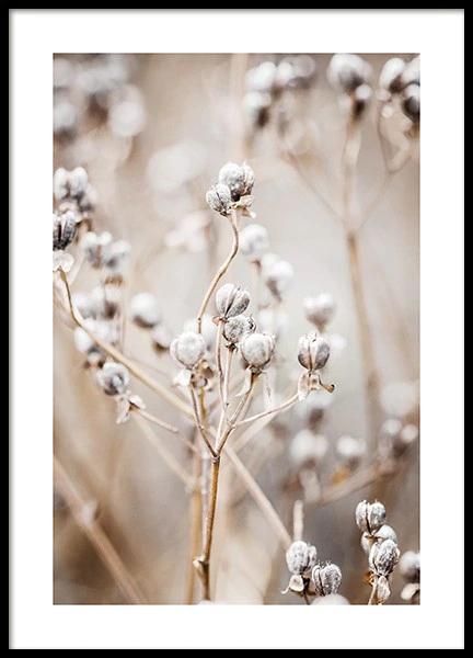 desenio print of plant stems