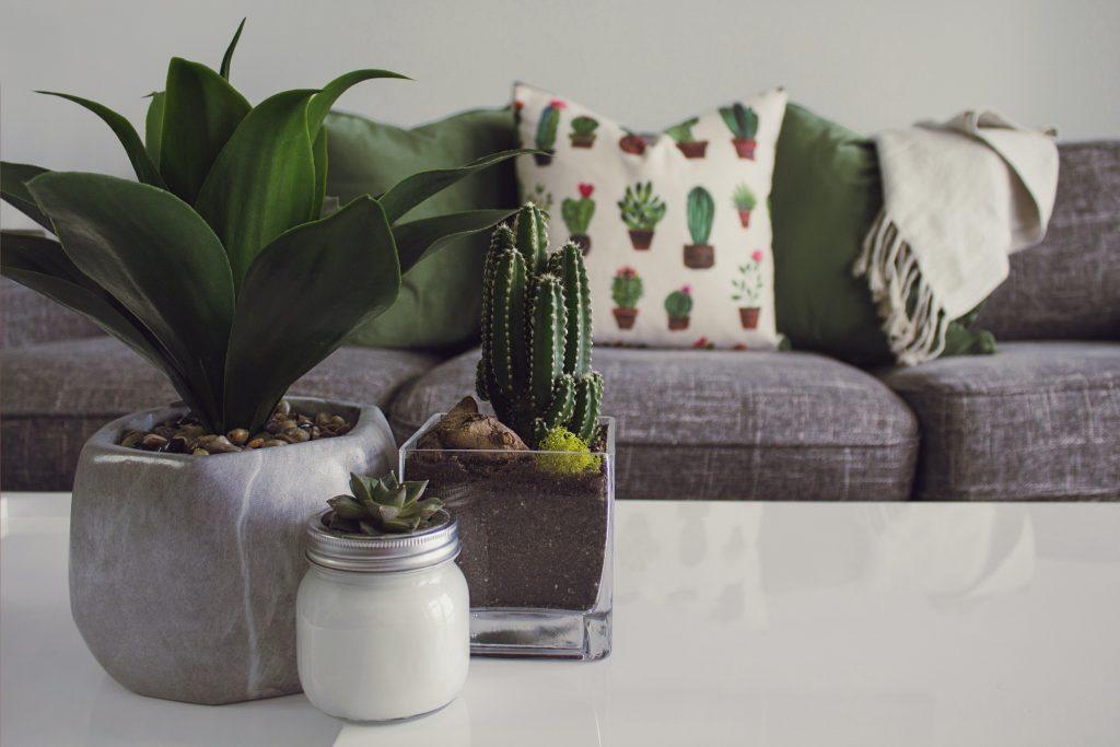 using plants to make a house feel like a home