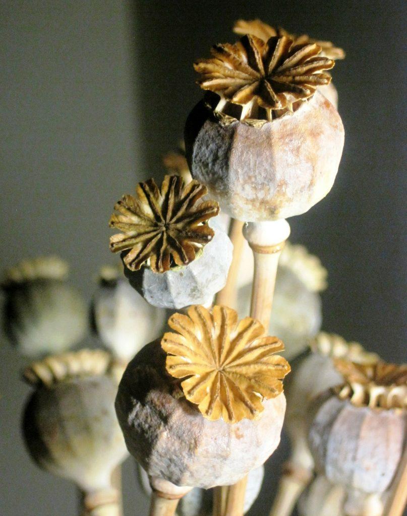 dried poppy seed heads