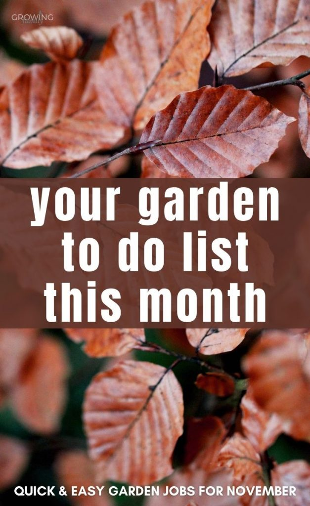 Not sure what to tackle in the garden this month? These quick & easy gardening jobs for November will help you keep the garden looking good.