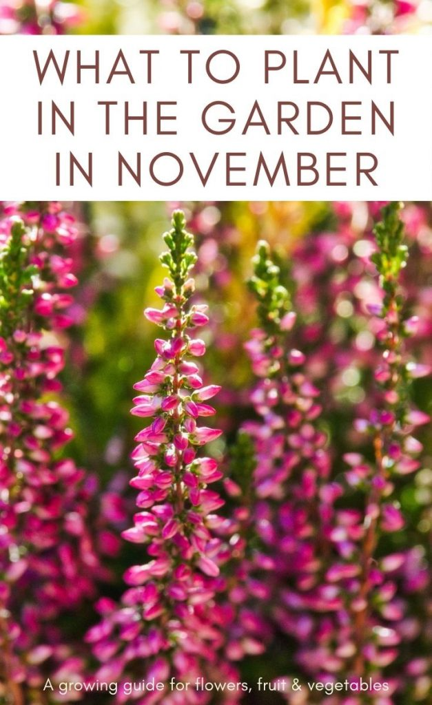 Ready to get planting in the garden? Check out these top picks for what to plant in November, including flowers, fruit and vegetables.