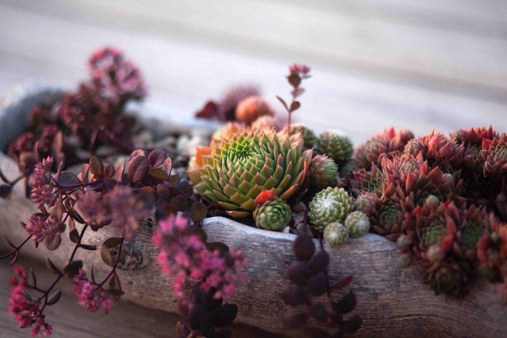 ideal plants for outdoor pots - succulents