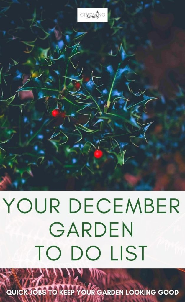 Not sure what to tackle in the garden this month? These quick & easy gardening jobs for December will help you keep the garden looking good.