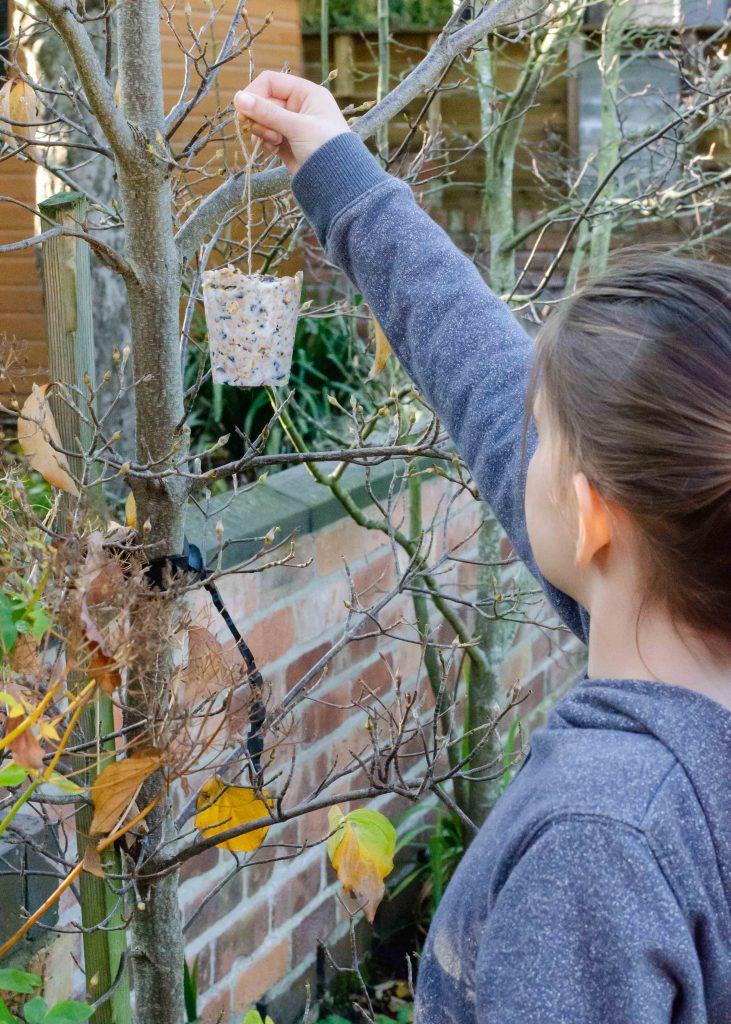 hanging bird feeder in tree