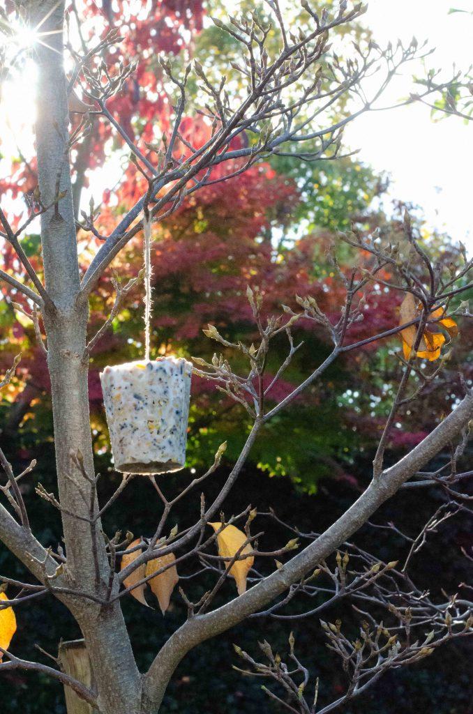 bird feeder hanging in tree