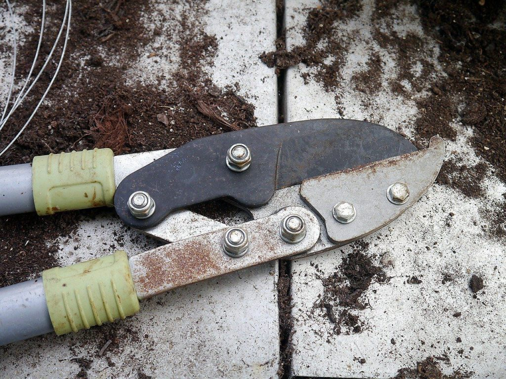 gardening in april - pruning