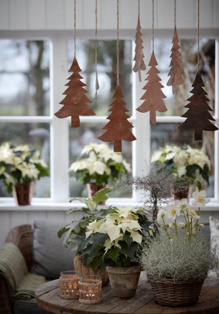 white poinsettia plants
