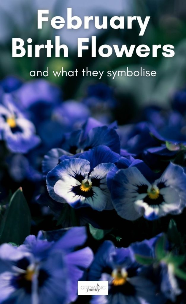 Do you know your birth flower? Just like birthstones, there are flowers for each month of the year. This guide lists the birth month flowers for February, and explains their symbolism.
