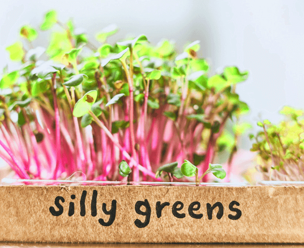 silly greens micro greens