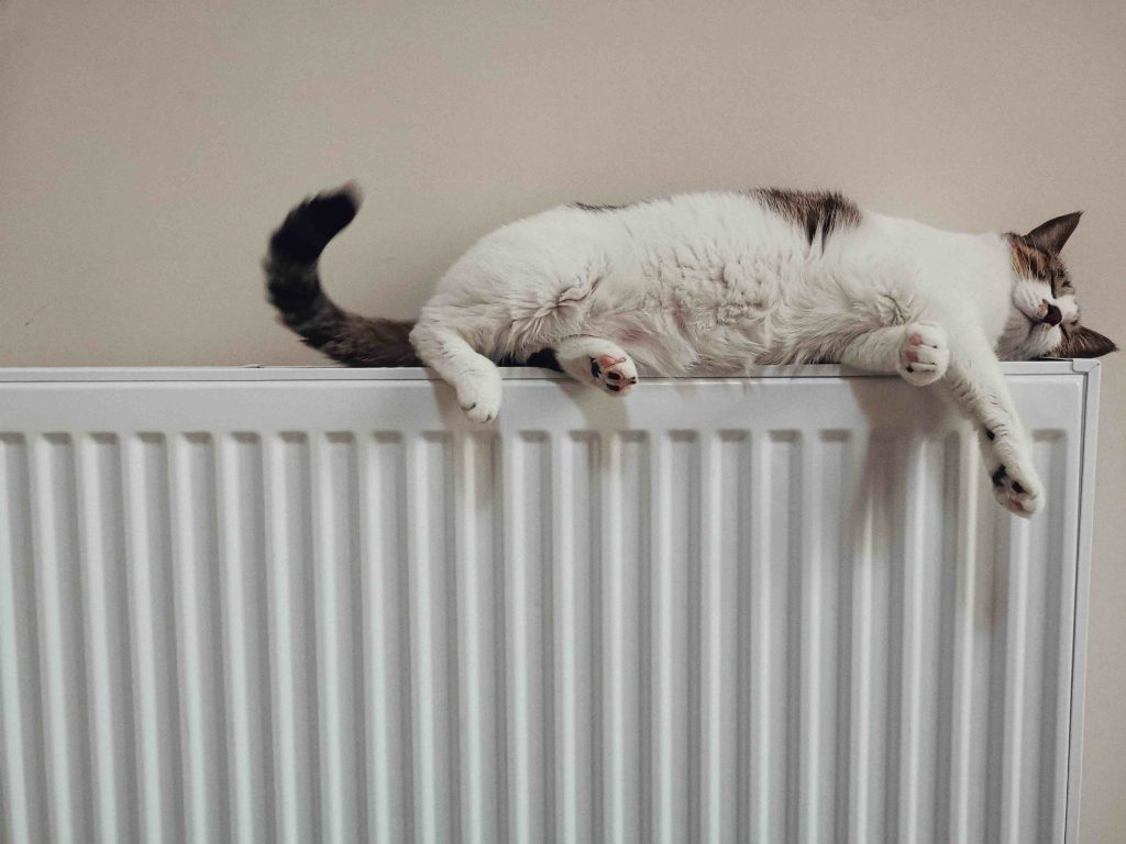 cat lying on radiator