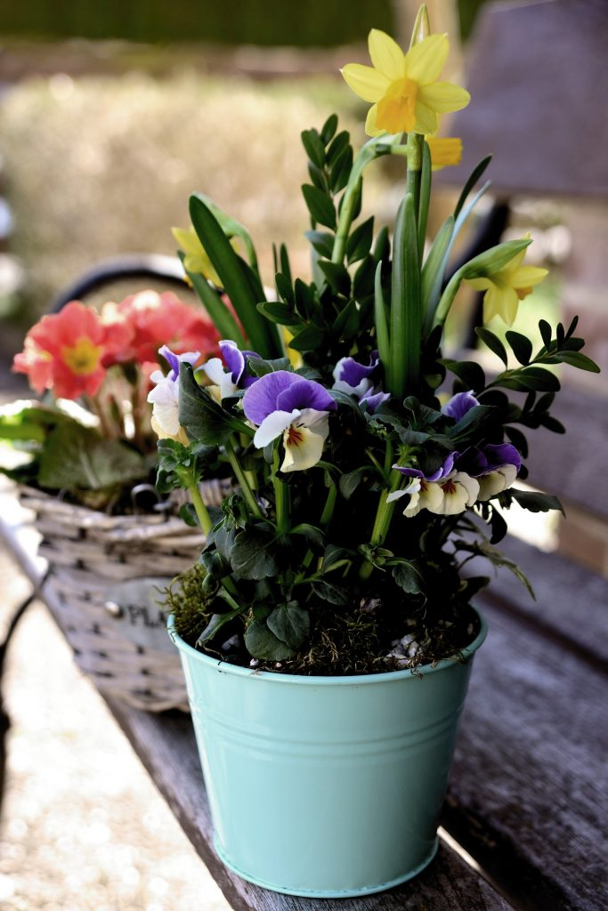 container of spring flowers with pansies and daffodils