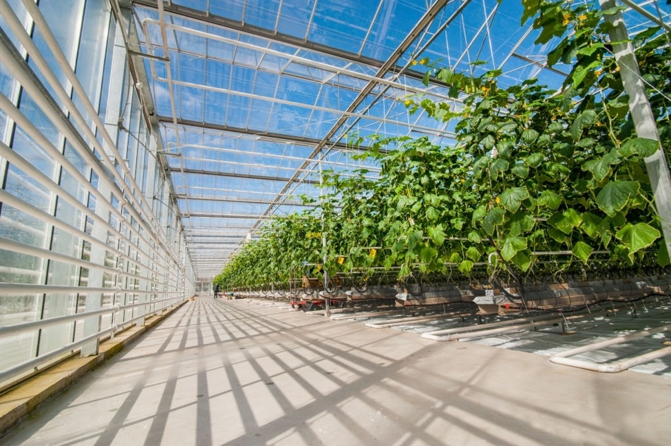 interior of large greenhouse