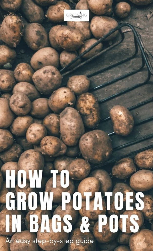 Think you don't have enough space to grow potatoes? Think again! Check out this easy guide on how to grow potatoes in bags.