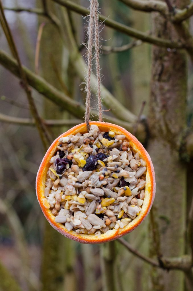 shaped diy bird feeder for kids to make and hang in the garden
