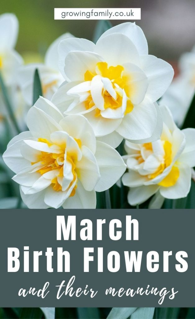 Every month has a birth flower, each with it's own special meaning. Here we take a look at the March birth flower, Daffodils and Jonquils.