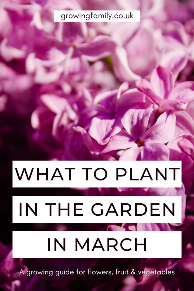 Ready to get planting in the garden? Check out these top picks for what to plant in March, including flowers, fruit, vegetables and bulbs.