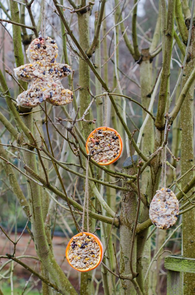 diy bird feeder for kids to make using cookie cutters and hollowed out oranges hanging in tree