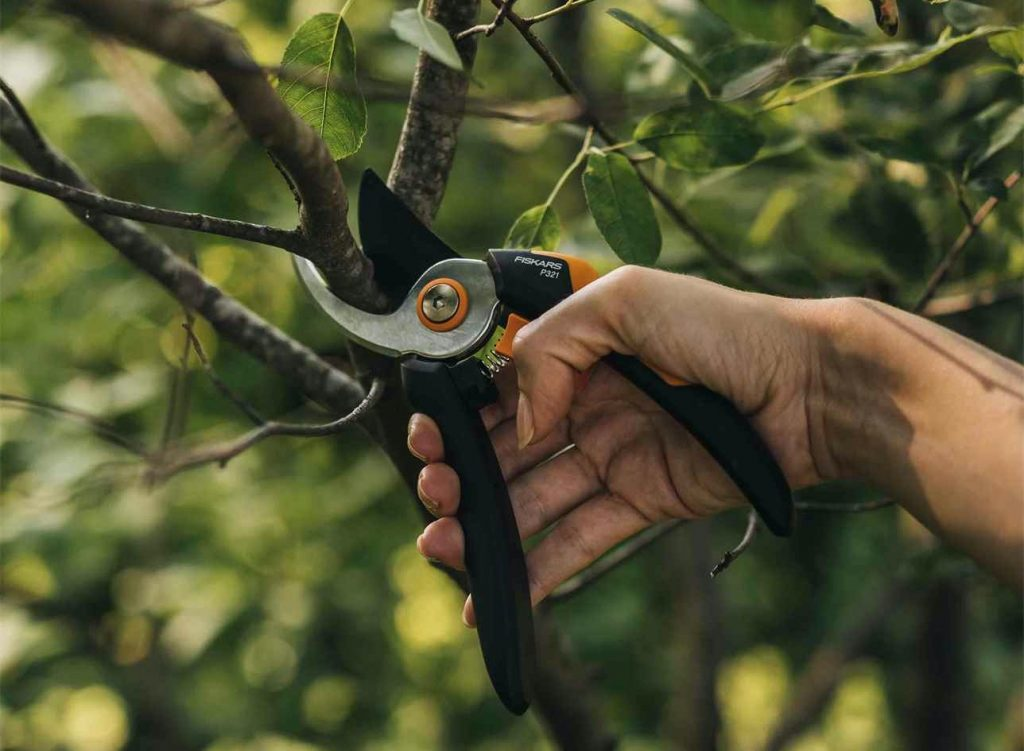 fiskars gardening tools - using the solid bypass pruner P321