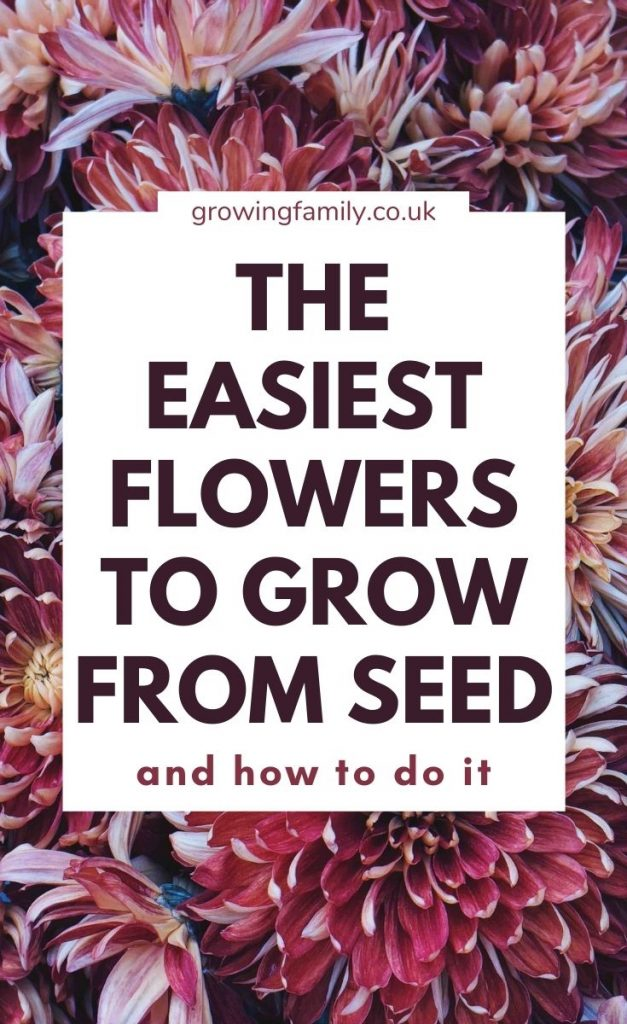 Need help growing flowers from seed? This flower gardening for beginners guide covers 12 easy flowers to grow from seed plus planting tips.