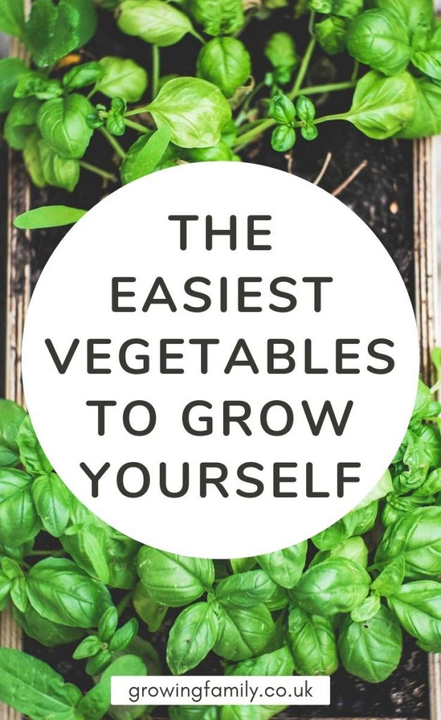 Want to grow your own vegetables, but not sure where to start? This handy guide lists ten easy to grow vegetables, and shows you how to do it.