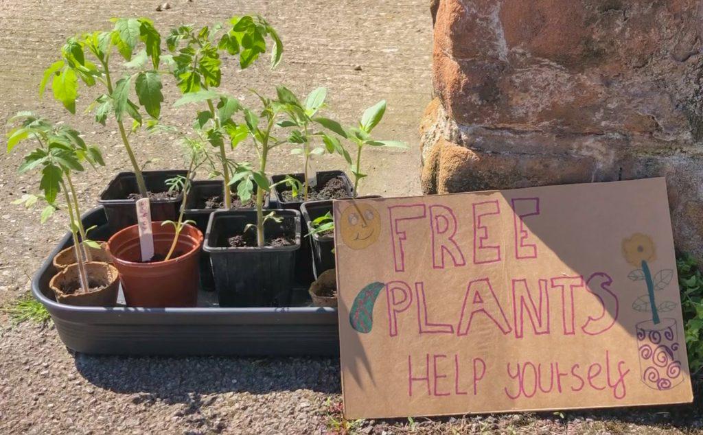 gardening on a budget - plant swap