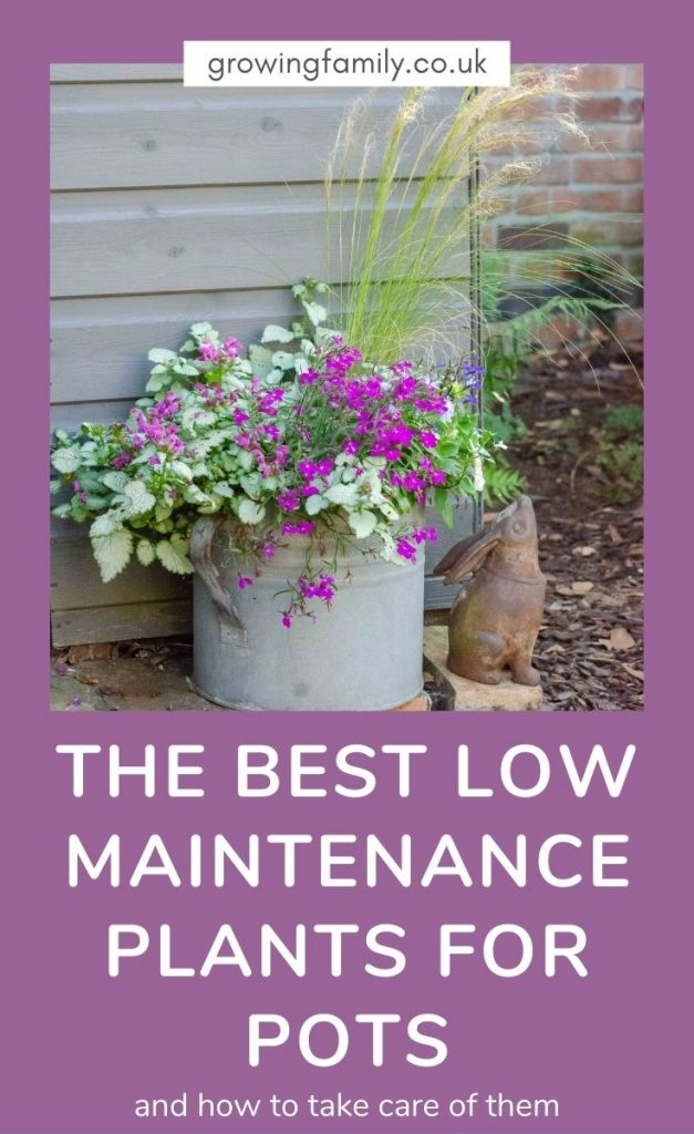 Over 25 fantastic low maintenance plants for outdoor pots , plus plant care tips and a guide to the tools you need for container gardening.