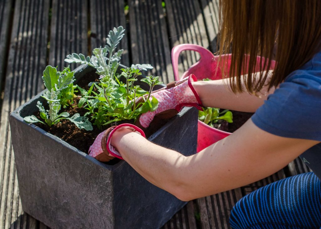 planting a container with bedding plants