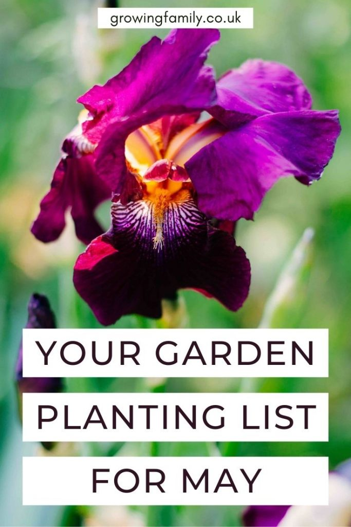 Ready to get planting in the garden? Check out these top picks for what to plant in May, including flowers, fruit and vegetables.