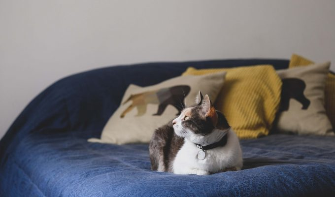 Tips for removing pet hair from your furniture
