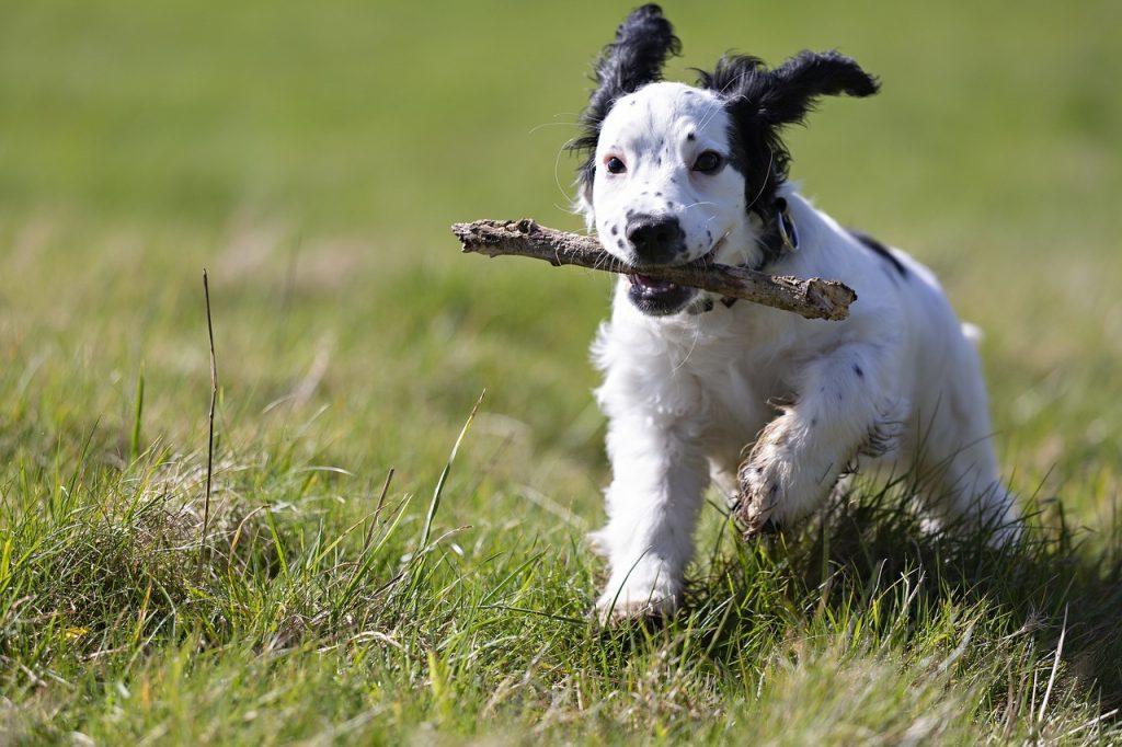 how to stop a dog from digging - regular exercise