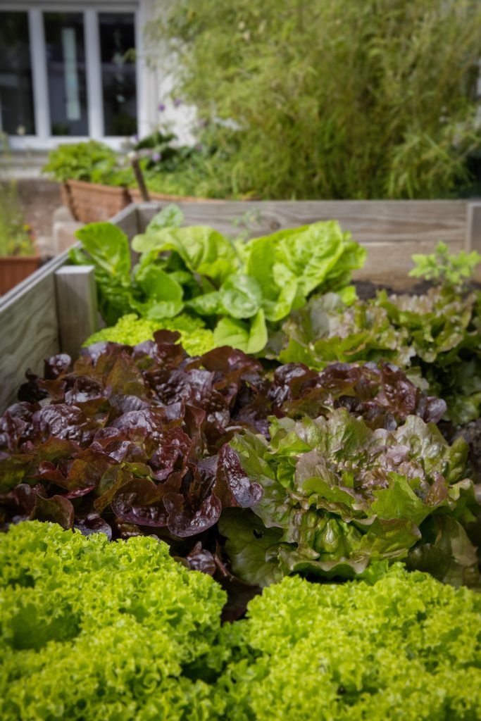 sustainable gardening: growing your own vegetables