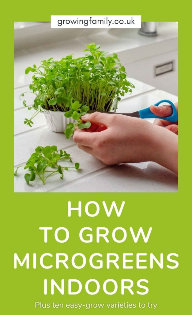 Want to learn how to grow microgreens at home?  Check out this step-by-step guide which also lists the best microgreens to grow.