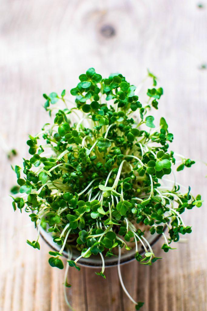 microgreen seedlings