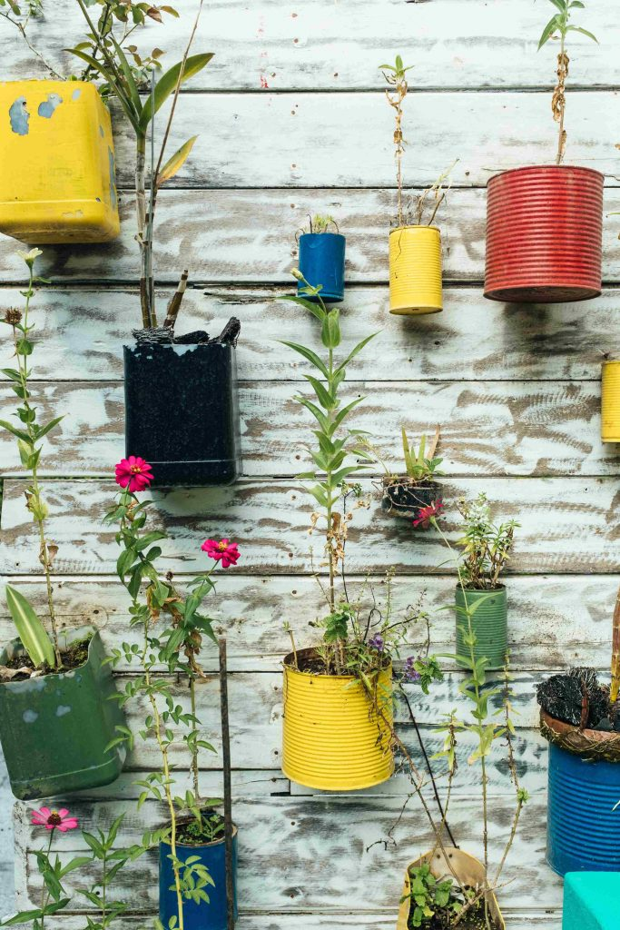 sustainable gardening - recycled tin can plant pots