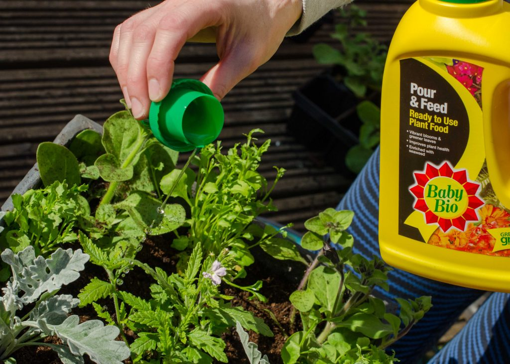 gardening in may - feeding container plants