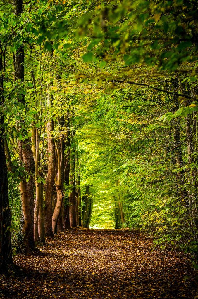 woodland image for nature captions