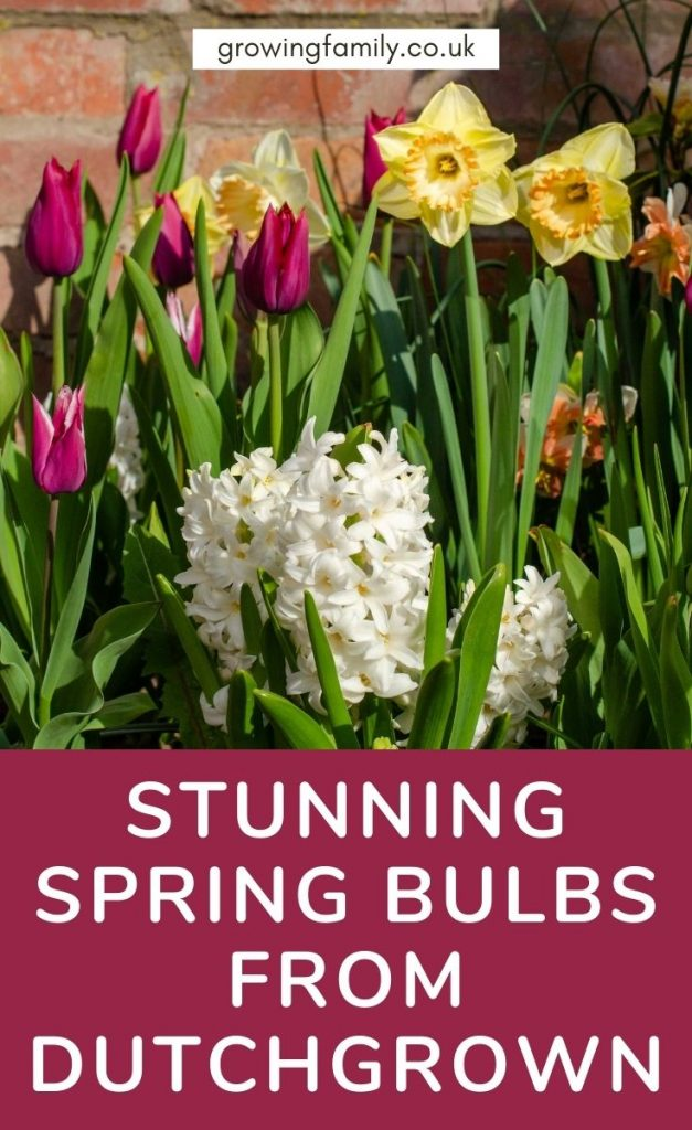 Bulbs are fantastic for garden wow factor in spring. We review a selection of flowering spring bulbs from premium bulb supplier DutchGrown.