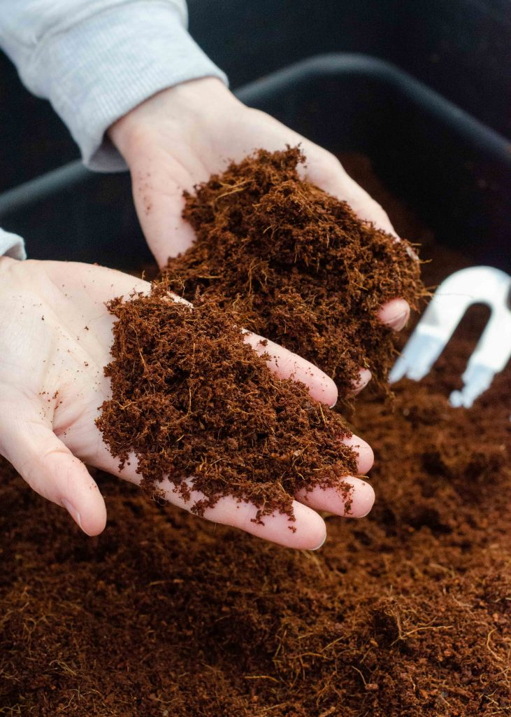 closeup of coco coir compost in hands