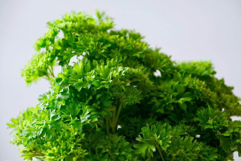 closeup of curly parsley leaves
