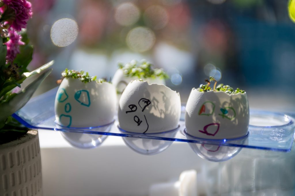 family gardening - growing cress heads