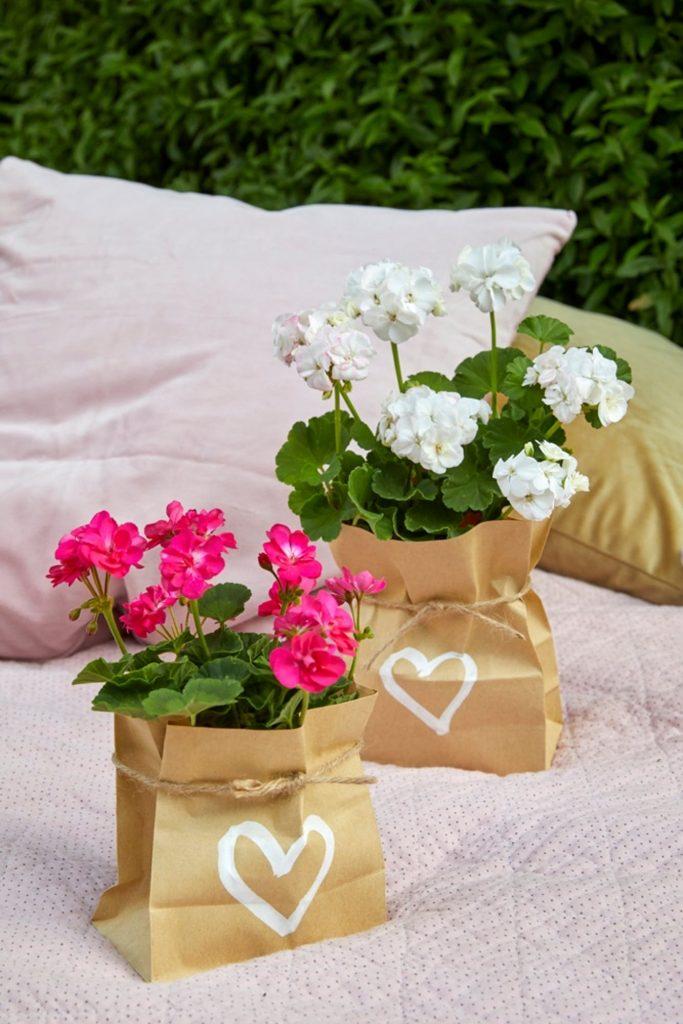 pelargonium plants in paper gift bags