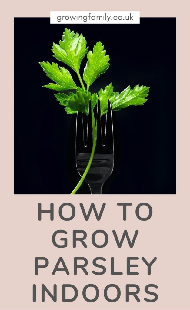 All the information you need for growing parsley indoors - covers equipment, growing conditions, planting instructions and harvesting tips.