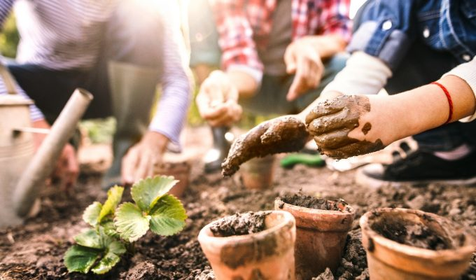 4 fun family gardening projects for you and your children