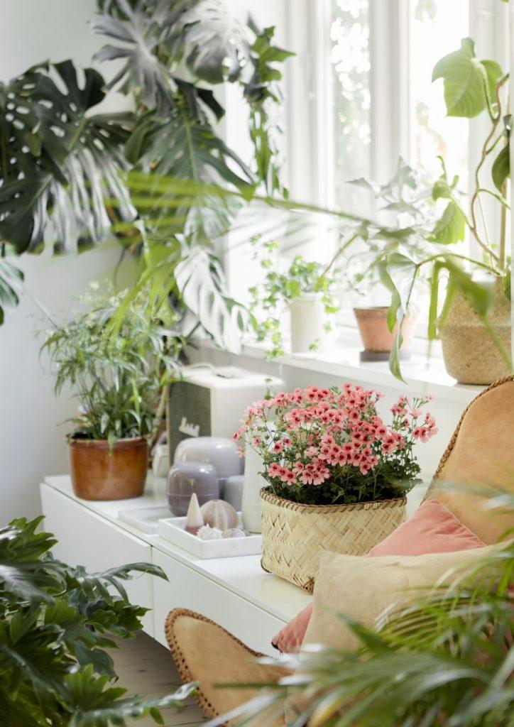 indoor garden room with houseplants