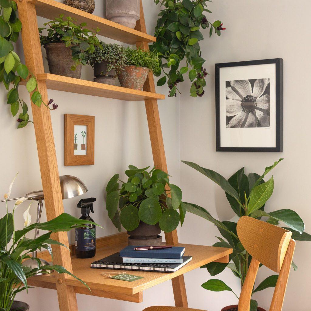 indoor plants on desk