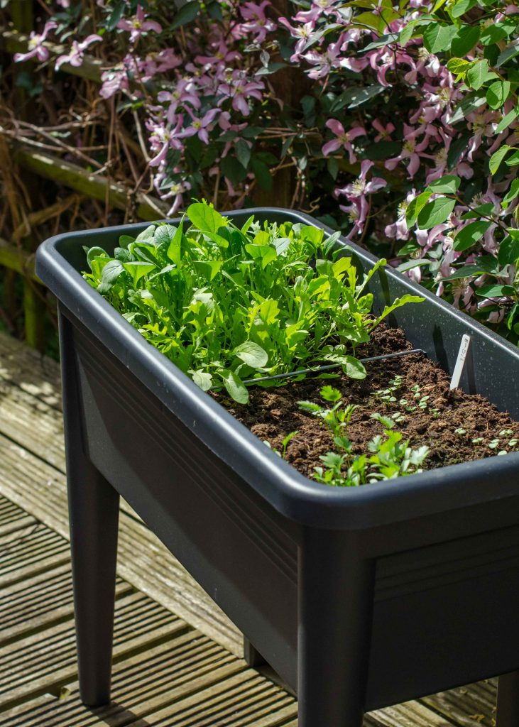 easy vegetables to grow in pots - salad