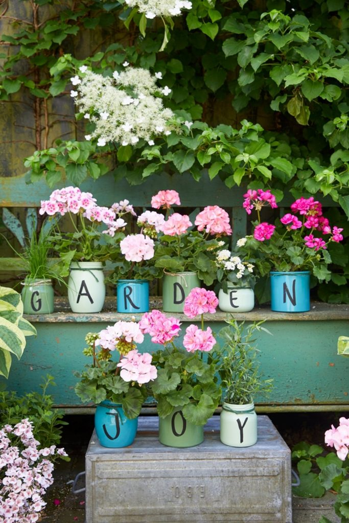 pelargonium plants in upcycled pots