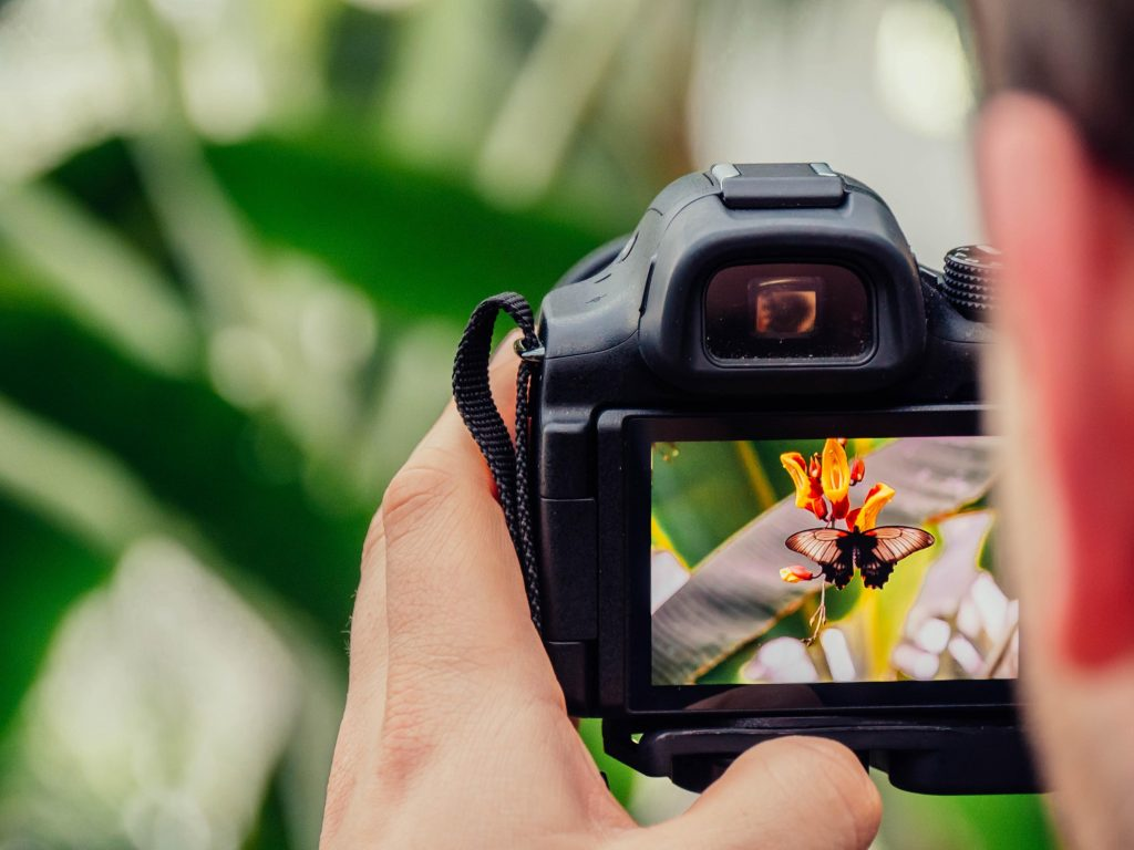 digital camera taking picture of butterfly