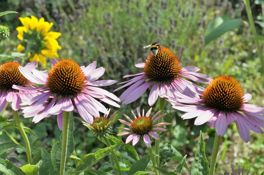 how to garden for wildlife - growing pollinator friendly plants